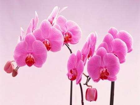 Как выглядит орхидея фото