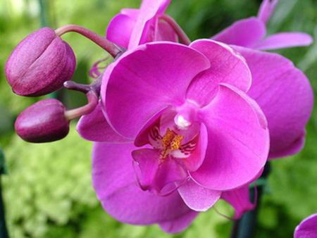 Орхидея: уход в домашних условиях.