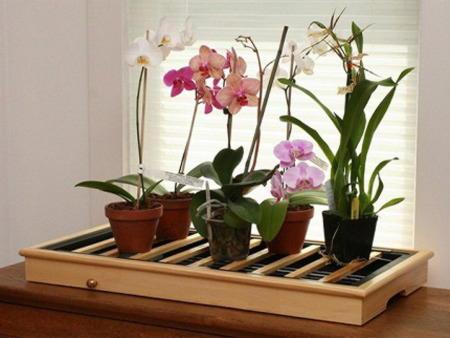 Освещение орхидеи