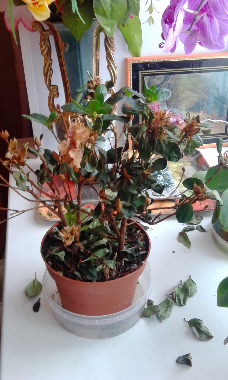 183 Растения опадают листья что делать