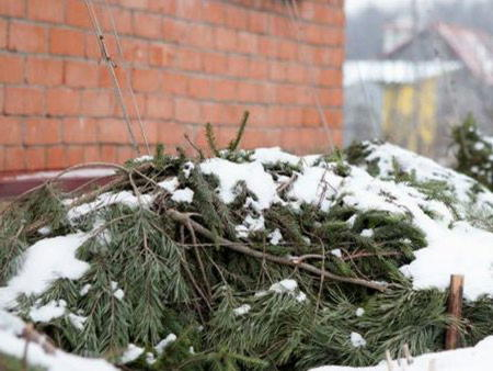 Готовим гортензию к зиме